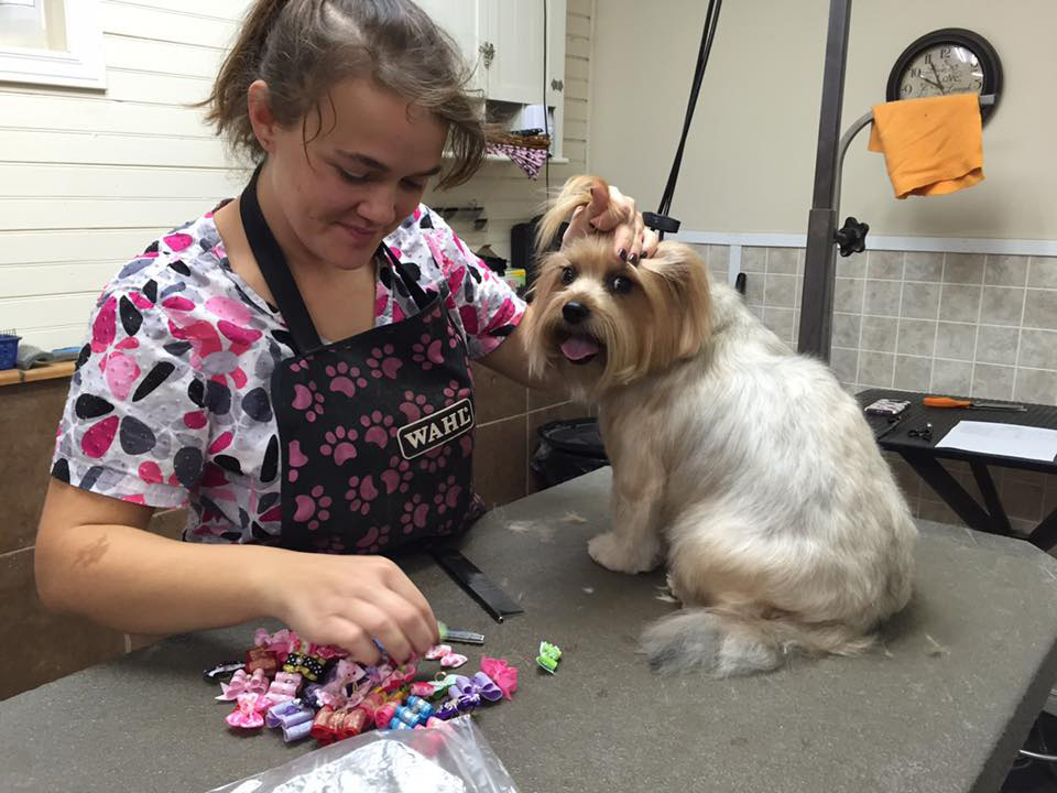 Dog grooming pet salon in moncton new brunswick for 4 paws dog salon