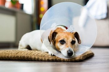 In Home Pet Care - Dogs