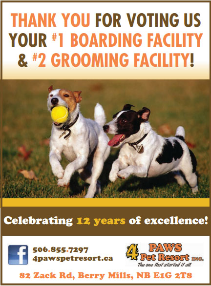 Voted 1 boarding facility in greater moncton for Boarding facility for dogs