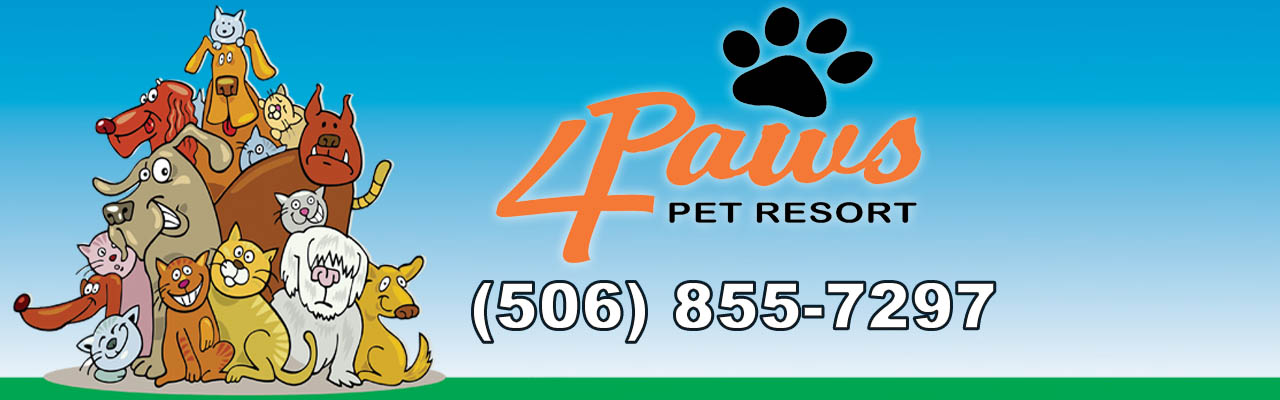4 Paws Pet Resort