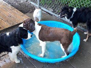 4 Paws Pet Resort Moncton NB