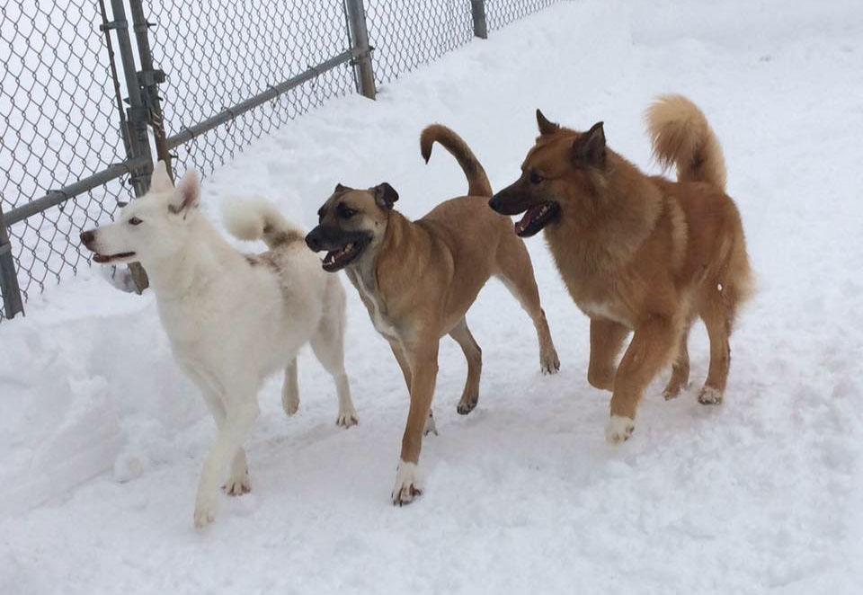 4 Paws Pet Resort Best Dog Boarding